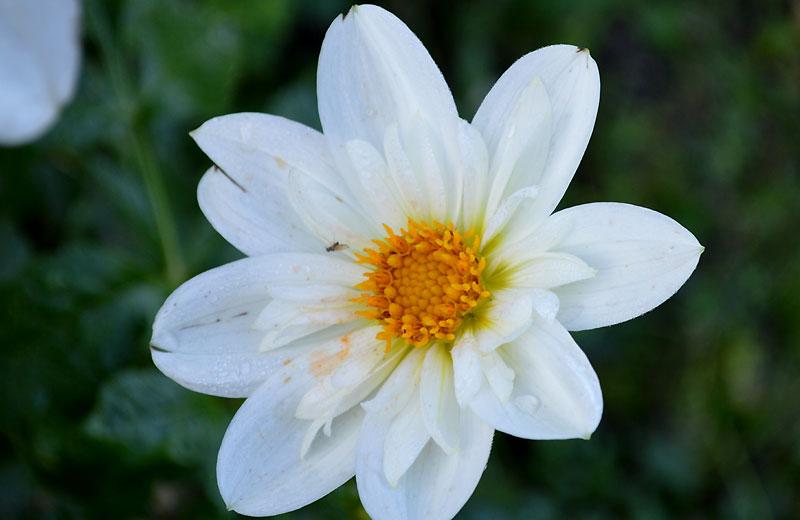 141027brideé-bouquet