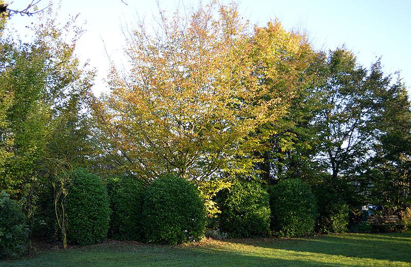 141102l'automne3