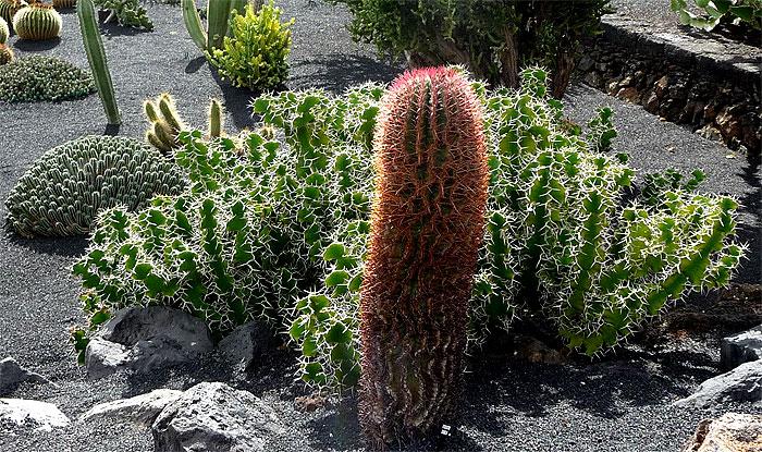 1502-cactus