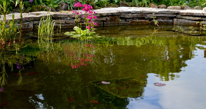 bassin-plantations