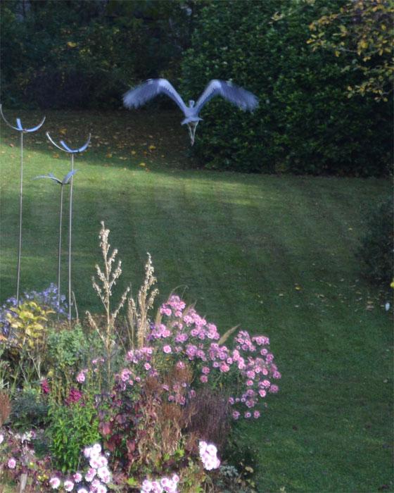 161029heronnearbirdstructure