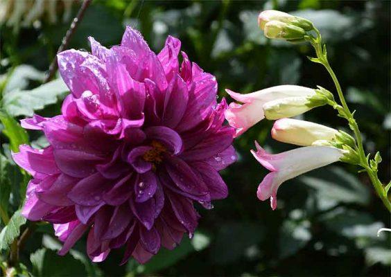170913D.Bluebell,PenstAppleBlossom