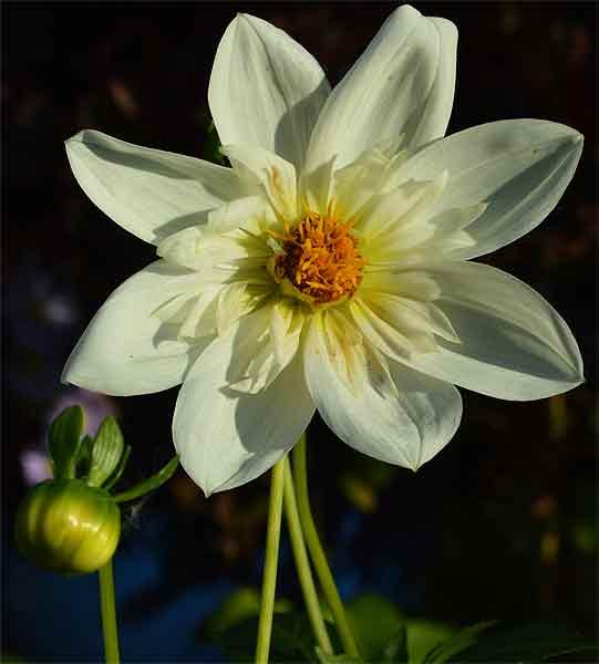 170929D.Bride's-Bouquet